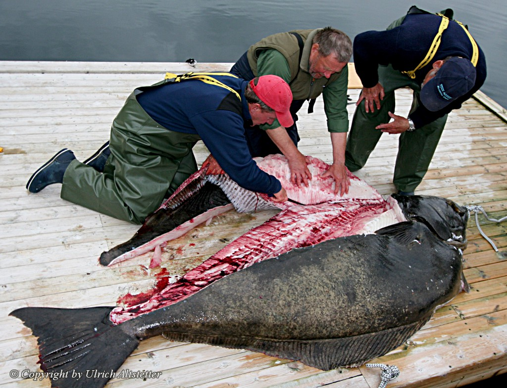 halibut, world records biggest, world record halibut, biggest